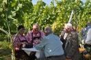 Tag des offenen Weingartens